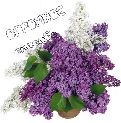 http://img0.liveinternet.ru/images/attach/c/8/101/957/101957188_2737e4d5.jpg