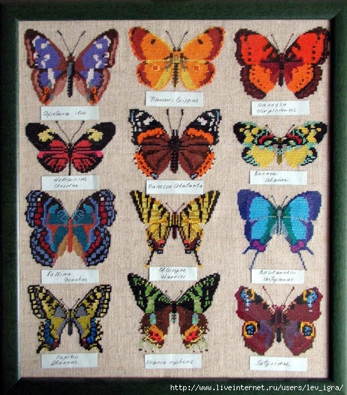 mariposas silvestres 00 (506x576, 306Kb)