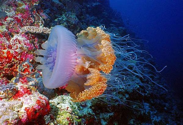 медузы фото 13 (600x410, 224Kb)