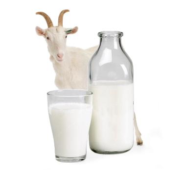 В магазинах Прииртышья появится местное козье молоко