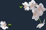 Превью схема-орхидея (700x457, 87Kb)