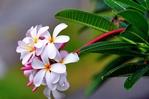 Превью схема-цветы (700x464, 191Kb)