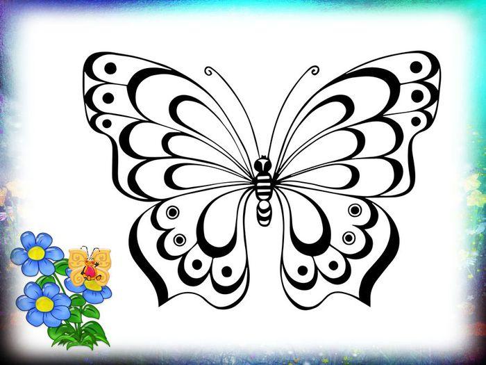 Раскраски бабочек по видам