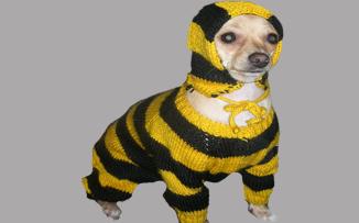 beeline_dog (326x203, 60Kb)