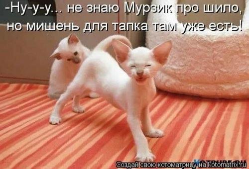 102231322_large_1371814804_novyekotomatr