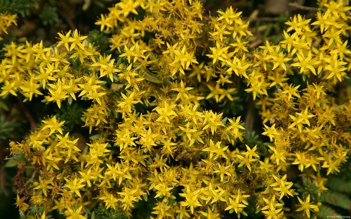 Желтые вазы фото 10