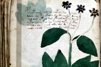 Рукопись Войнича 1 (420x280, 116Kb)