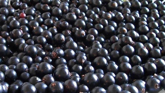 Рецепт: Варенье из черной смородины «Пятиминутка