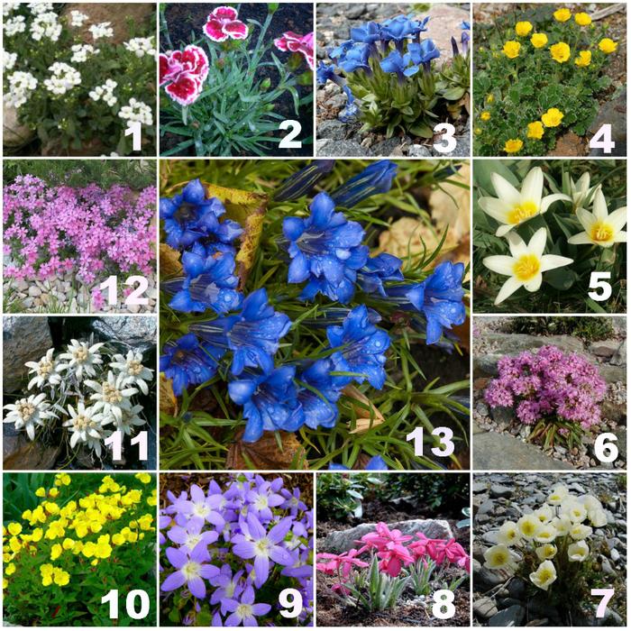 Все комнатные цветы семена фото