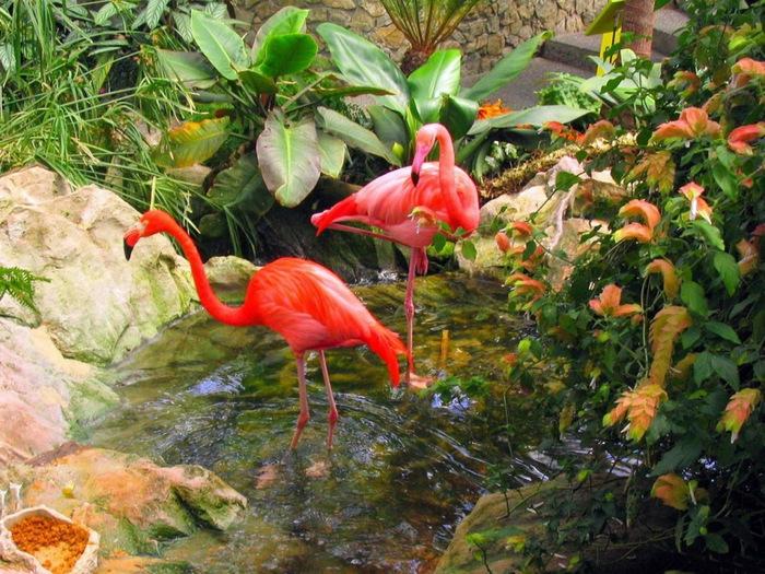 1366133216_u10_3973 фламинго (700x525, 190Kb)