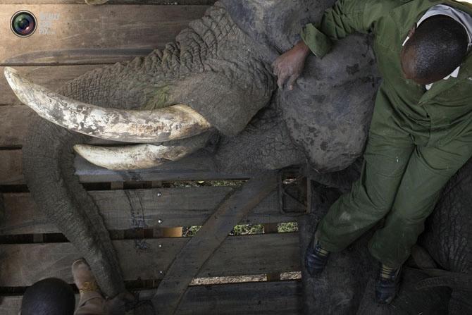 слон фото 3 (670x447, 149Kb)