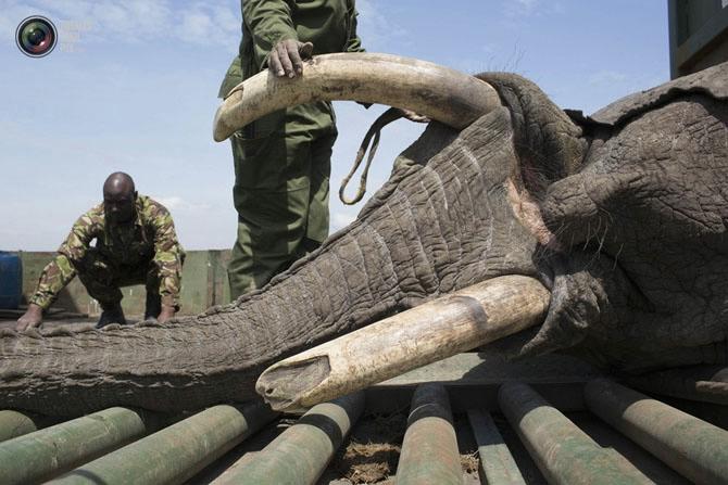 слон фото 5 (670x447, 182Kb)
