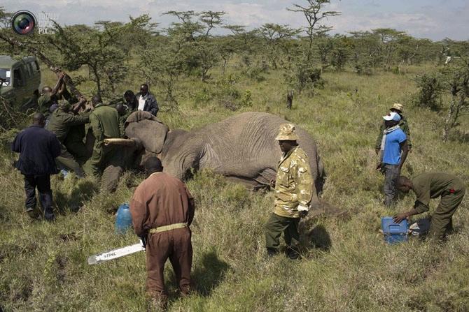 слон фото 12 (670x447, 264Kb)