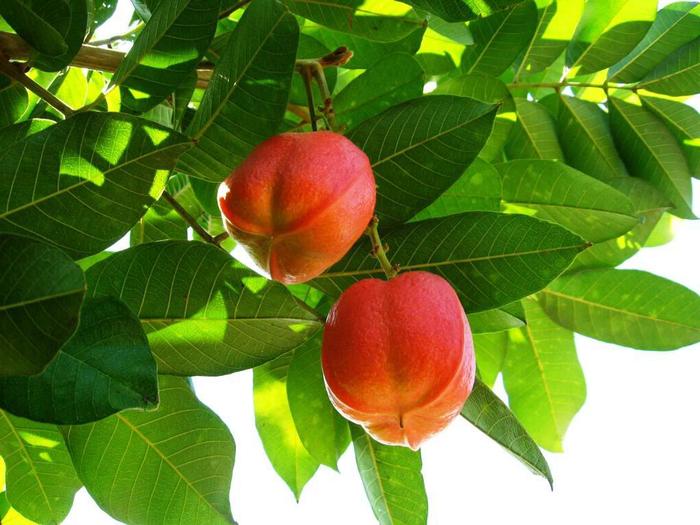экзотический фрукт аки фото 2 (700x525, 415Kb)