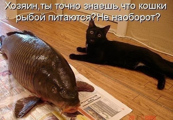 поитив (600x417, 68Kb)