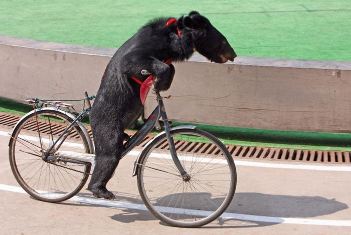 Ехали медведи на велосипеде