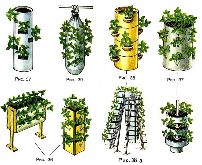 Выращивание клубники вертикально своими руками