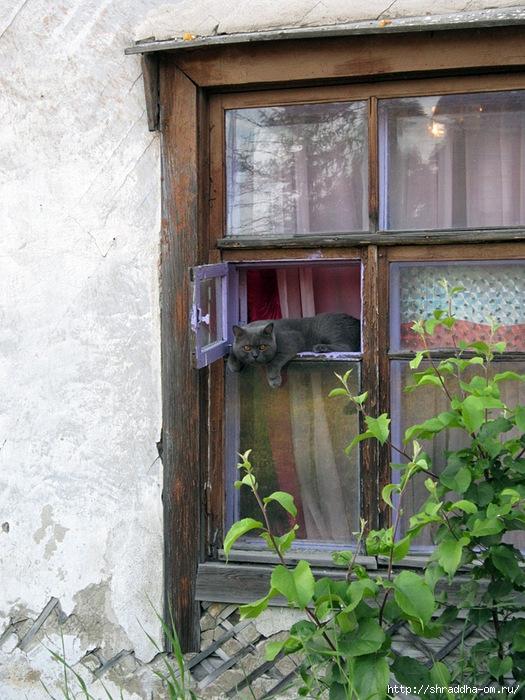 Котик в Сортавале (525x700, 308Kb)