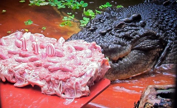 крокодил Кассиус Клей фото (700x430, 292Kb)