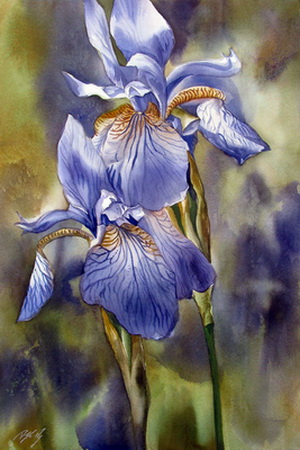 Blue Irises (300x450, 74Kb)