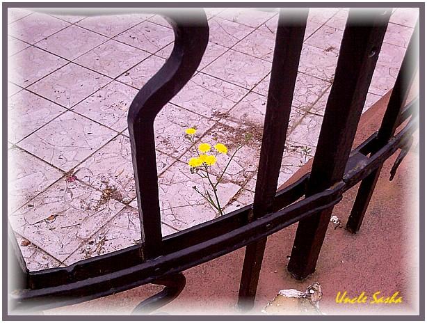 foto-0098.06.13.3 (614x464, 124Kb)
