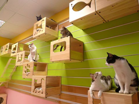 cat_house17 (480x360, 152Kb)