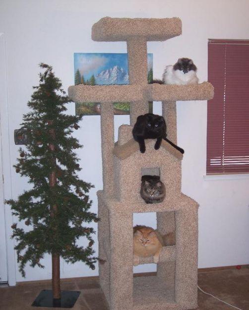 cat_house20 (502x625, 194Kb)