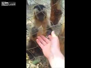 4208855_monkey (320x240, 8Kb)