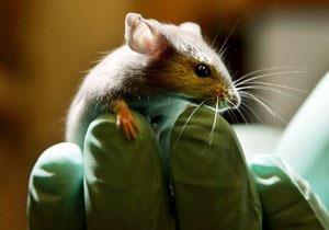Мышь - Долли (300x210, 29Kb)