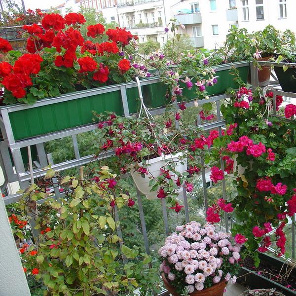 цветы на балконе (600x600, 201Kb)