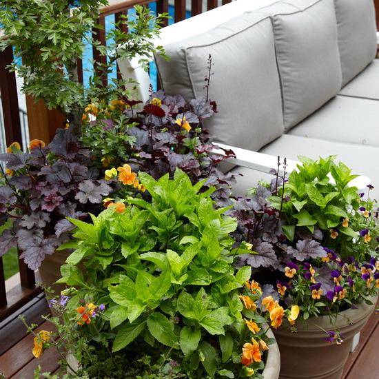 цветы на балконе.jpg1 (550x550, 141Kb)