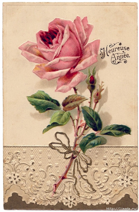 lace-rose-vintageimage-Graphics-Fairy (459x700, 288Kb)