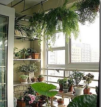 Цветы на балконе: 16 вариантов дизайна балкона. обсуждение на liveinternet - российский сервис онлайн-дневников.