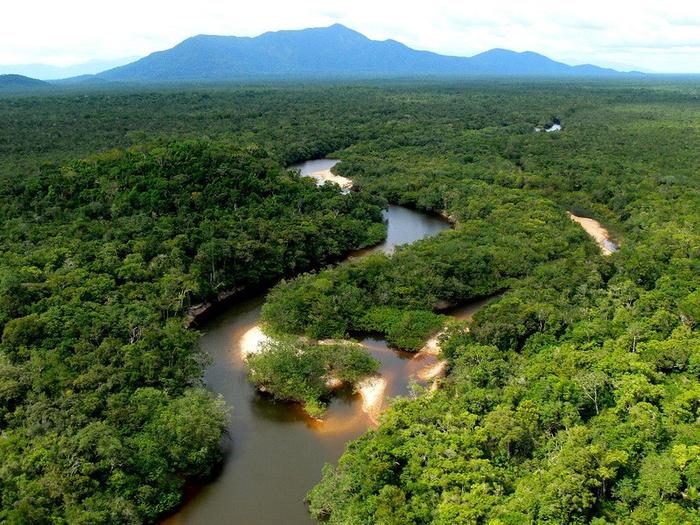 Леса Амазонии1 (700x525, 537Kb)
