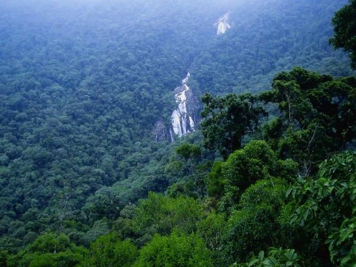 Леса Амазонии4 (700x525, 407Kb)