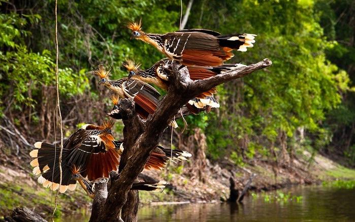 Леса Амазонии6 (700x437, 431Kb)
