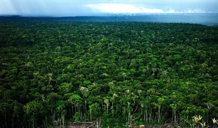 Леса Амазонии8 (700x411, 395Kb)