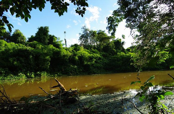 Леса Амазонии9 (700x461, 498Kb)