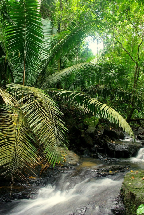 Леса Амазонии25 (469x700, 521Kb)