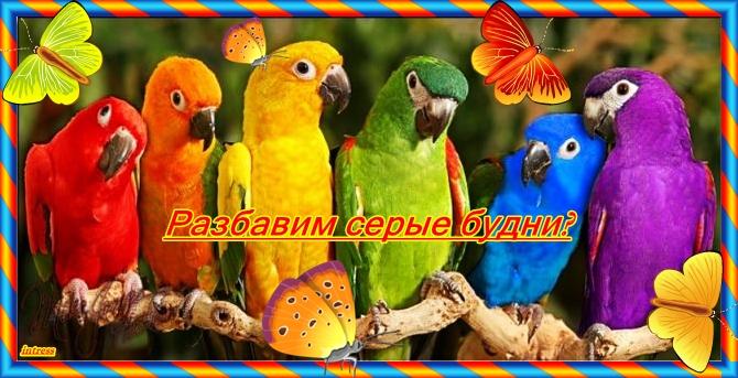 попугайчики1 (670x343, 237Kb)