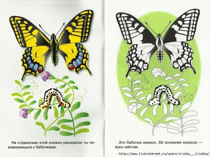 Раскраски бабочек махаоны