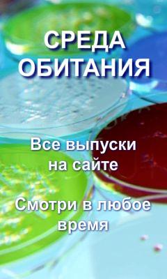 PR20111118143220 (240x400, 28Kb)