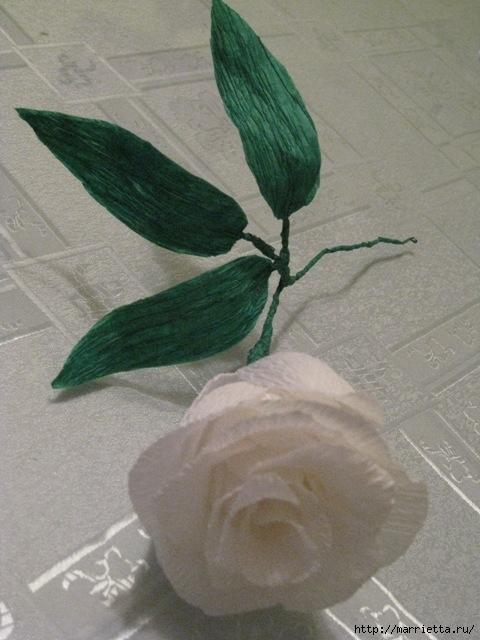 Очень красивые розы из гофрированной бумаги (16) (480x640, 176Kb)