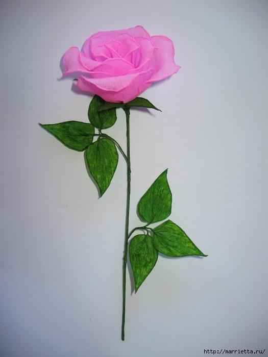Очень красивые розы из гофрированной бумаги (35) (525x700, 166Kb)