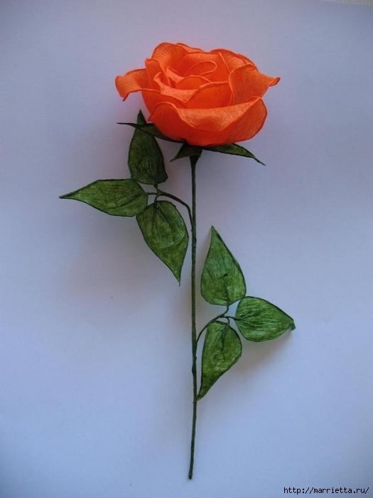 Очень красивые розы из гофрированной бумаги (36) (525x700, 192Kb)
