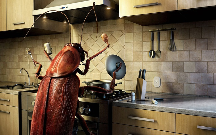 bug_cooking-1440x900 (700x437, 135Kb)
