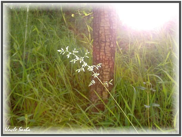 foto-0098.06.13 (612x462, 90Kb)