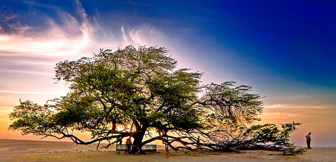 дерево (670x323, 88Kb)