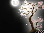 Превью сакура (22) (640x480, 132Kb)