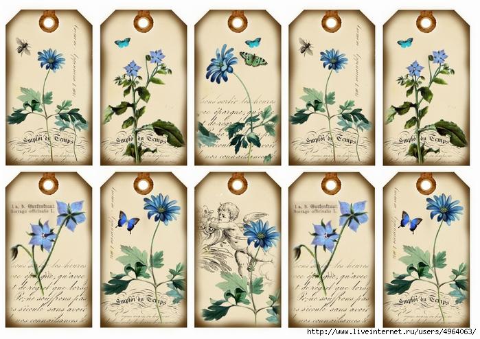 Blaublümchen (700x494, 306Kb)